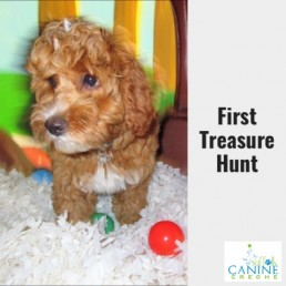 Playroom first treasue hunt