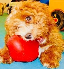 Puppy Pawty 3